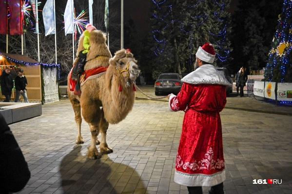 Зоозащитники считают, что мужчина жестоко обращается с верблюдом