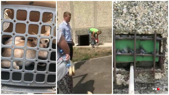 «Жалобно мяукали, просили о помощи»: тюменцы спасли кошек, которых замуровали в подвале жилого дома