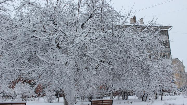 Завалит по пояс: в Новосибирск идут мощные снегопады и метели