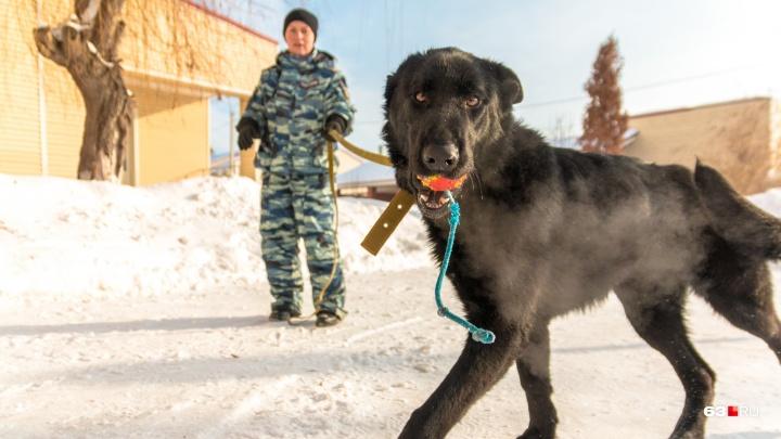 В Самарской области телефонный хулиган «заминировал» здание АВТОВАЗа