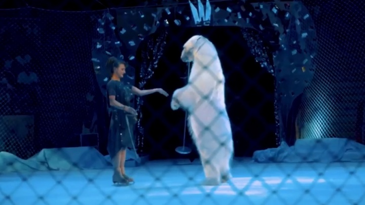 В самарском цирке покажут единственный в мире аттракцион с белыми медведями