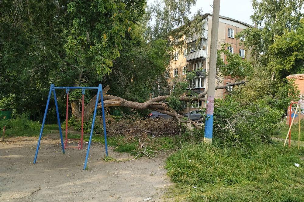 Дерево на детской площадке