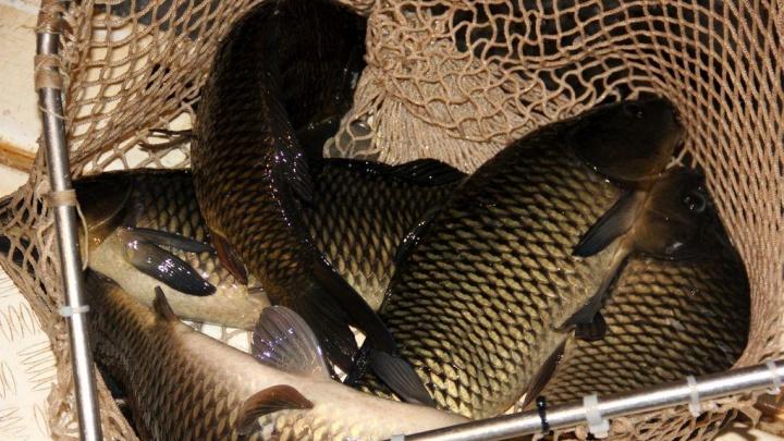 Четыре месяца исправительных работ: в Башкирии наказали рыбака-браконьера