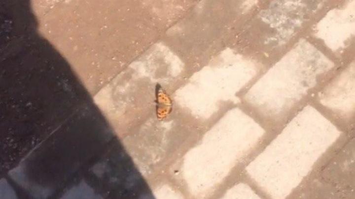 По Уфе порхают первые бабочки