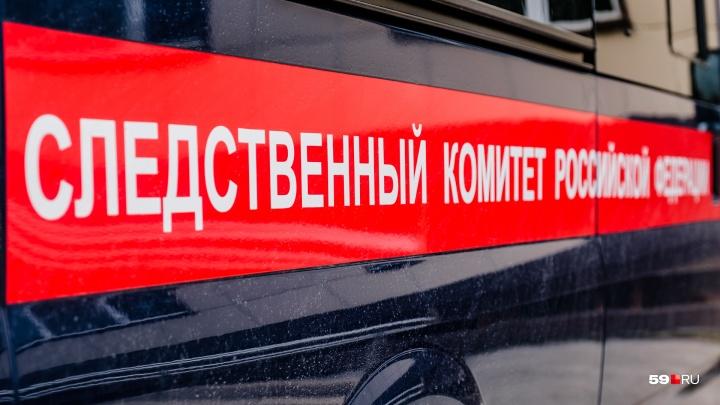 Расследованием нападения стаи собак на ребенка в Перми занялся Следственный комитет