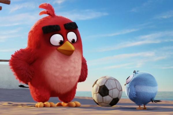 На самом деле птички не злые, они за справедливость