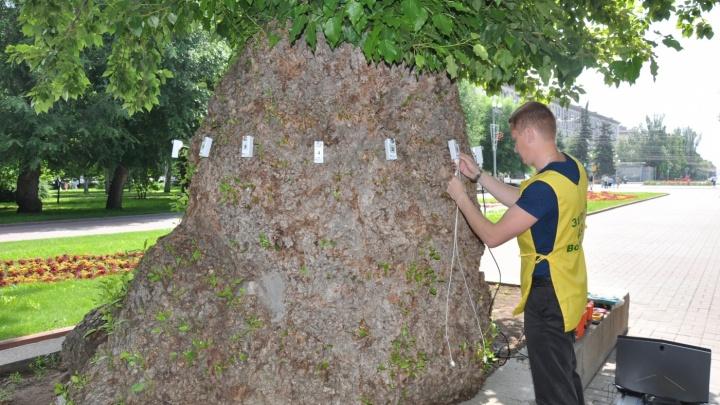 Клон погибающего в Волгограде легендарного тополя Победы высадили в Пензе