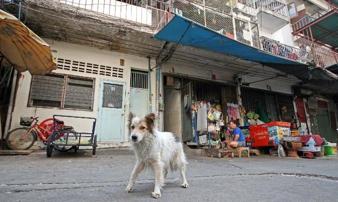 Жители Башкирии пожаловались на атаку бездомных собак