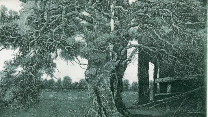Вещество искусства: волгоградцев зовут посмотреть на дерево в музее ИЗО