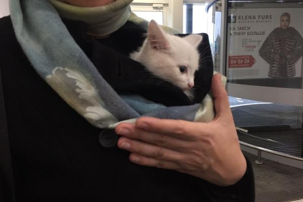 Новая хозяйка забрала себе котёнка сегодня около 17:00