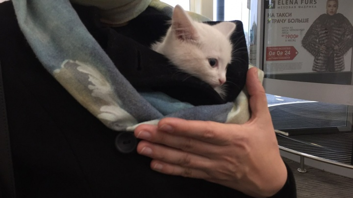 Спасённый из канализации котёнок нашёл себе хозяйку через НГС