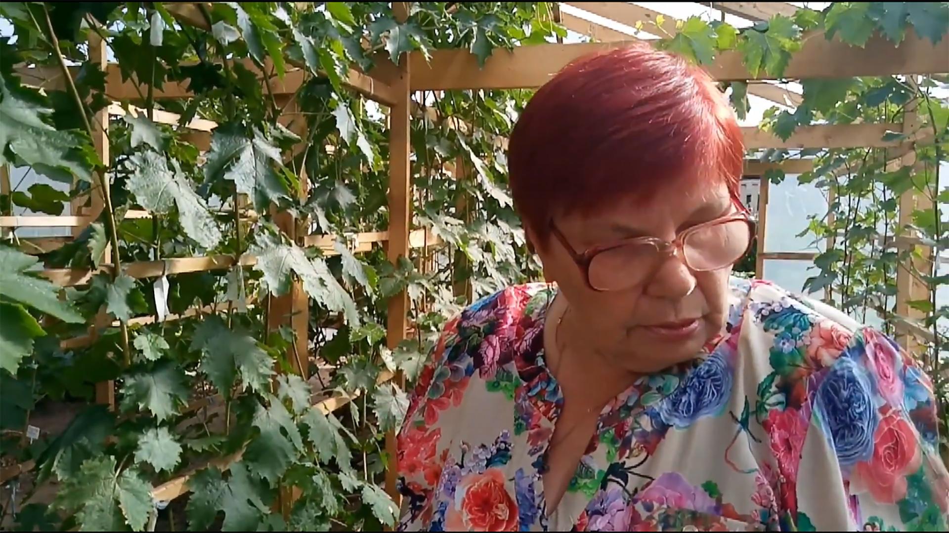 Вместо морковки и картошки Лидия кормит внуков виноградом