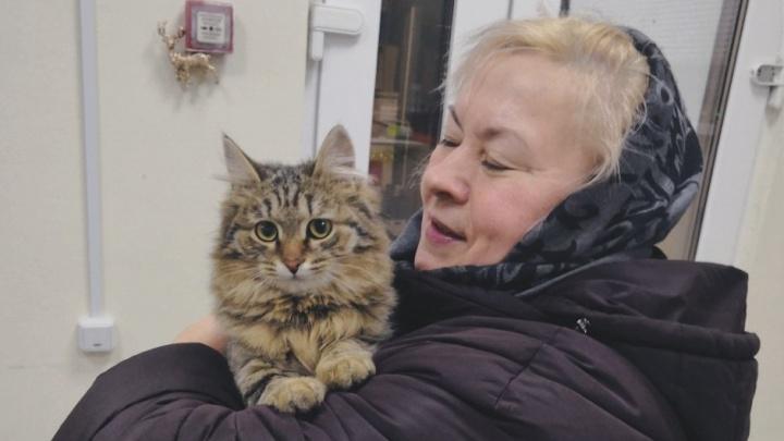 Операция вместо эвтаназии: история пермского котенка-гермафродита с врожденной патологией