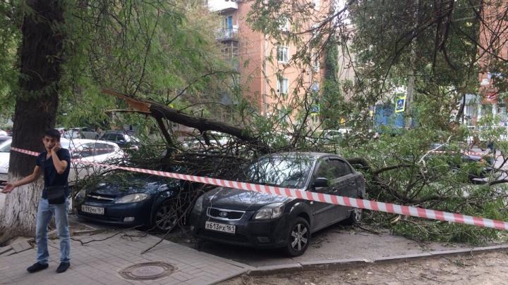 В центре Ростова рухнувшая из-за ветра ветка разбила три машины
