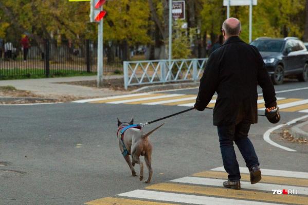 Люди боятся больших собак — а вдруг укусит?