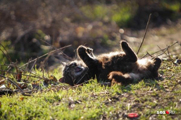 Ростовским котятам удастся насладиться теплыми осенними днями и понежиться на солнышке