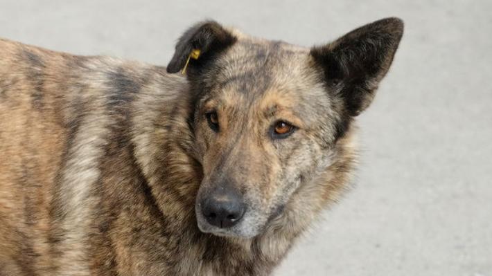 Пермские зоозащитники проведут пикет в защиту бездомных собак и против провокаций СМИ