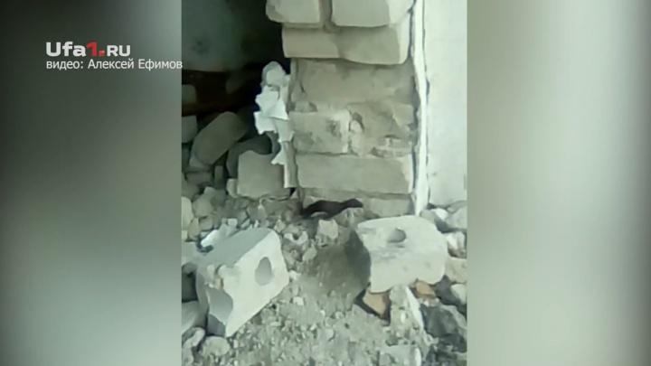 В Башкирии на камеру засняли куницу