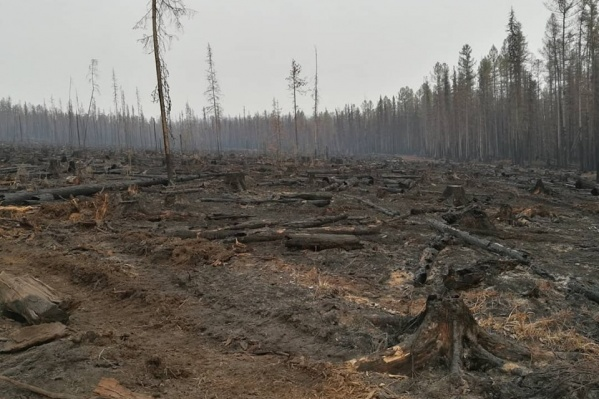 Последствия лесных пожаров в Богучанском районе