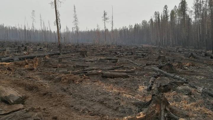 На тушение лесных пожаров в крае Медведев дал 733 млн рублей