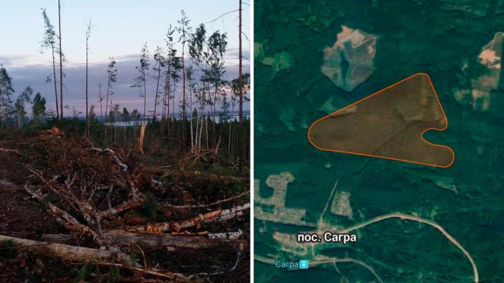 Все ради щебня: на Урале вырубили лес, защищавший древнейшие каменные палатки