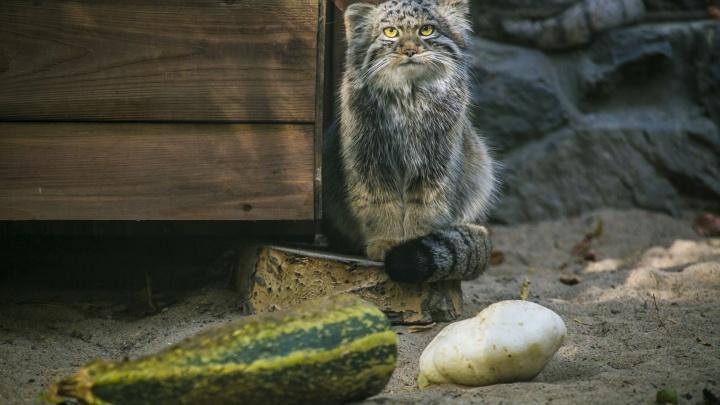 Несите кабачки: новосибирский зоопарк объявил сбор овощей для животных