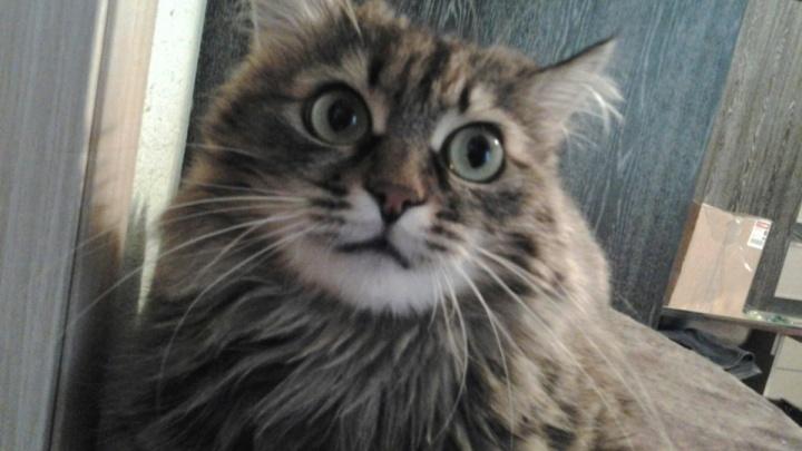 Перепуганный кот провалился в вентиляцию и был освобождён в ходе масштабной спецоперации