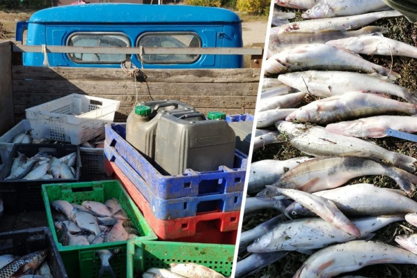 Богатый улов браконьеров может обернуться заключением