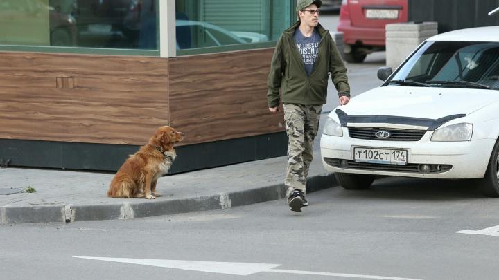 Боимся домой идти: стая собак поселилась у «Территории бизнеса» в Челябинске и нападает на людей