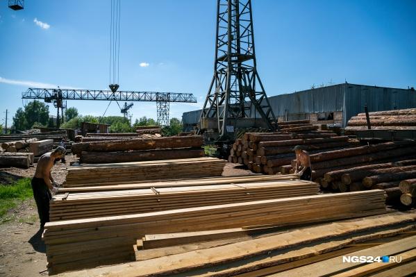 Масштабные проверки в лесной отрасли начались летом