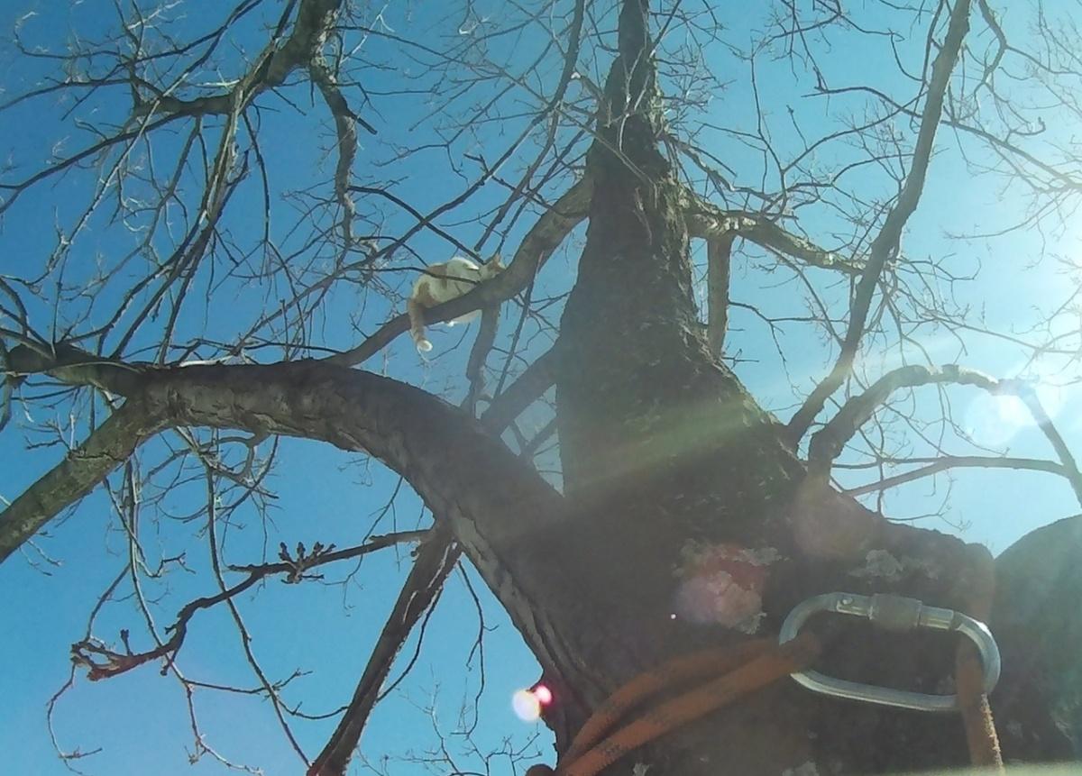 Спасатель лезет за котом, забравшимся на дерево