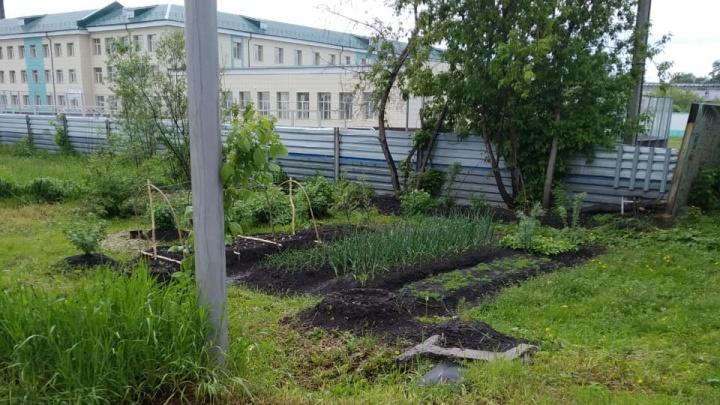 Напуганный штрафом сибиряк убрал огород, который разбил на месте свалки