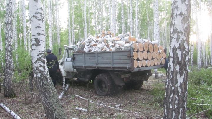 Житель Шумихи вырубил березы на 18 тысяч рублей