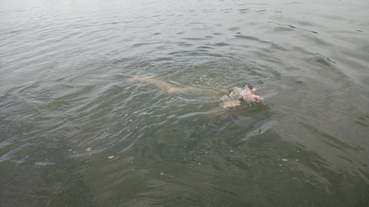 Спасатели вытащили из Ини тело утонувшего неделю назад мальчика