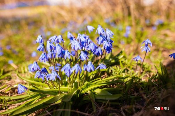 В Ярославле весна!