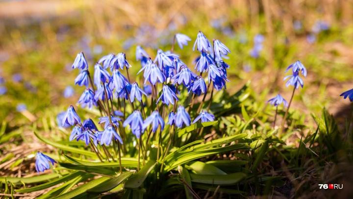Весна в городе: в преддверии потепления распустились яркие цветы. Тёплый фоторепортаж