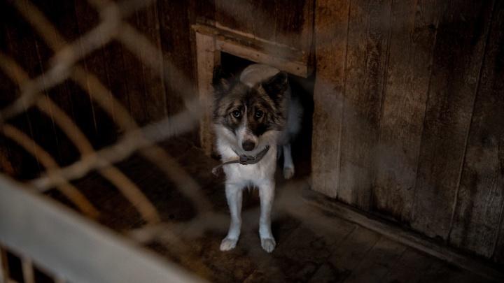 «Там творилась настоящая вакханалия»: зоозащитники вновь обвиняют Центр по проблемам домашних животных