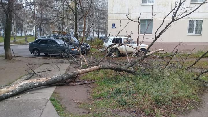 Повалило остановки и деревья, оборвало провода: как Пермский край пережил ураганв конце октября
