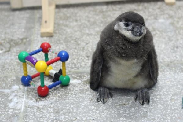 Животные очень любят разнообразные игрушки