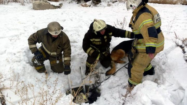 Спасение девушки с собакой из колодца в пяти фотографиях МЧС