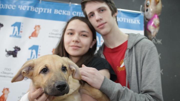 Девять щенков с тяжёлой жизнью нашли хозяев и отправились в новые дома