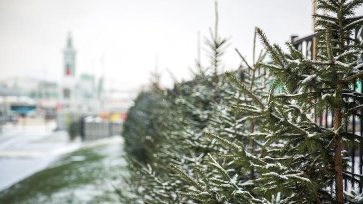 В Новосибирск идёт холодная и снежная погода, но тепло ещё вернётся