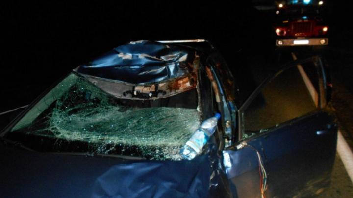 Вся машина была в крови: в Ярославской области «Фольксваген» протаранил лося