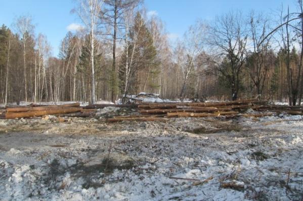 Вырубленный лес мужчина продавал через организацию