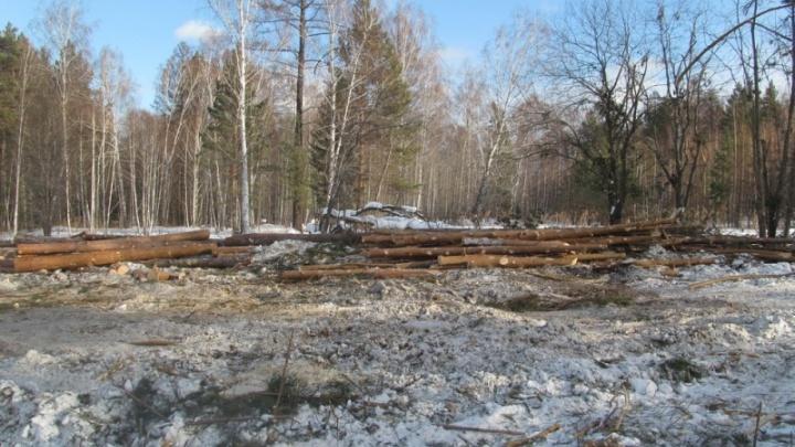 В Рыбинском районе «черный лесоруб» продал лес на 9 млн рублей