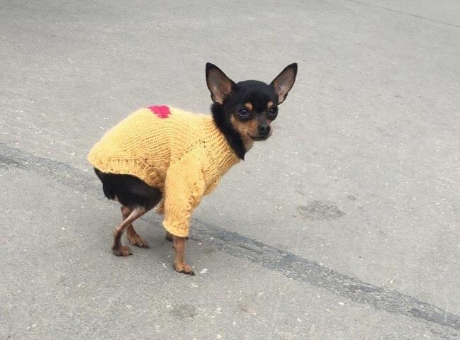 Во время фотосессии породистые собаки помогают бездомным сородичам
