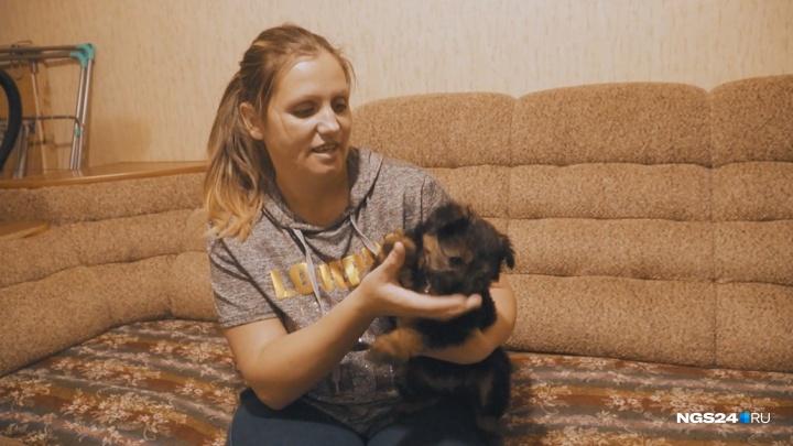 Спасенный из холодной машины щенок обрел любящую семью и новое имя