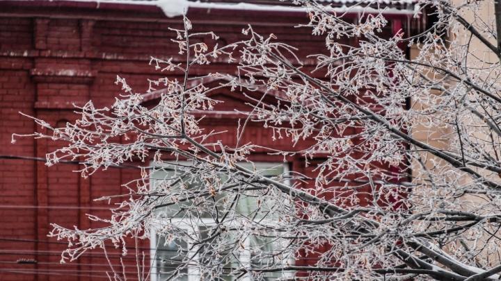Лёд на ветках и проводах: МЧС предупреждает жителей Прикамья о сильной изморози