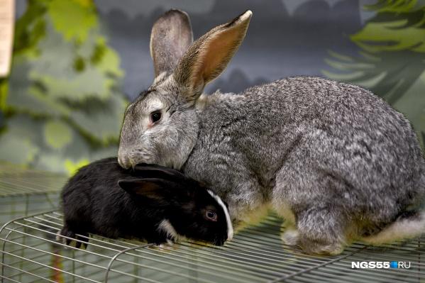 Омичи могут увидеть кроликов разных пород