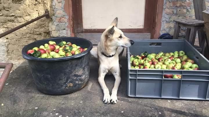 «Аэрофлот» пообещал разобраться в ситуации с пропажей пса Марвела, которого пермячка везла в Берлин